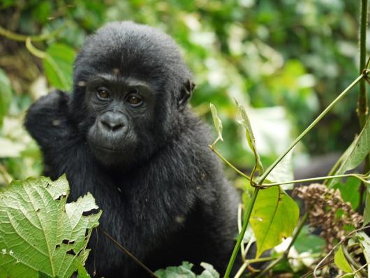 Expedició a Uganda
